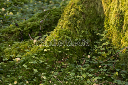 thick moss growing on the base