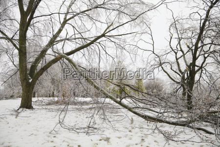 aftermath of ice storm in chorley