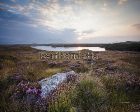 daybreak over connemara bog with heather