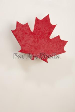 canadian red maple leaf edmonton alberta