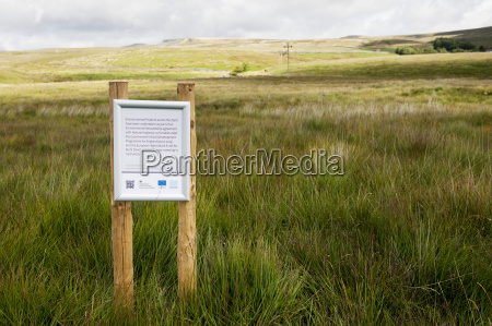 moorland in a regeneration scheme sponsored