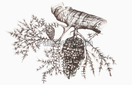sketch of a pine cone hanging