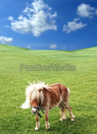 pony in nature