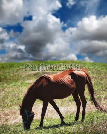single horse in nature