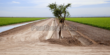 two sugar beet fields are divided