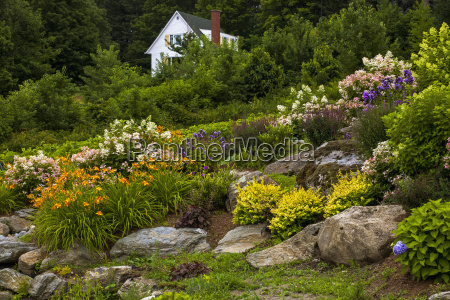 rock garden and colourful blossoming plants