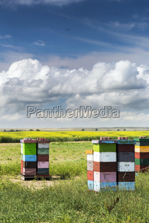 colourful stacked bee hive boxes in