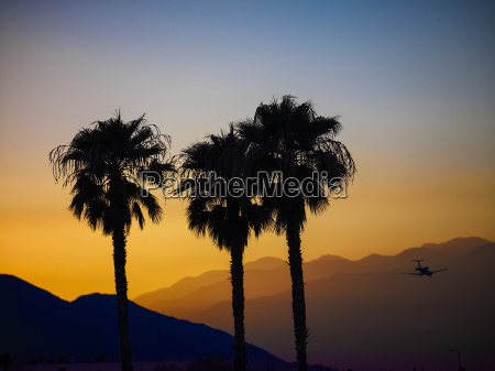 silhouette of three palm trees and