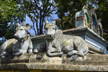 statues of sacred cows on hindu