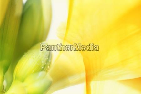 a floral composition