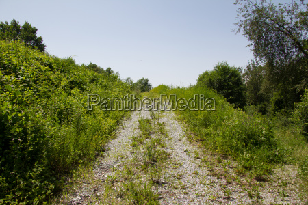 rising partially overgrown straight gravel road