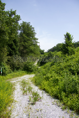 gravel road with shrubbery on a