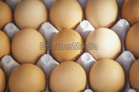 eggs in a carton berkeley california