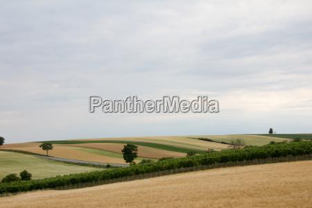 hilly farmland crossing a road in