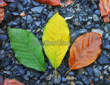colorful leaves in autumn