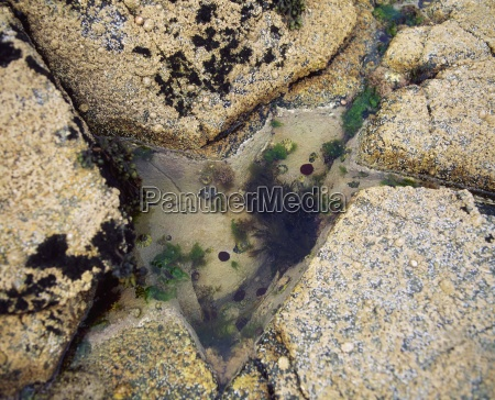 marine life rock pool