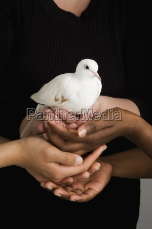 many hands holding a dove