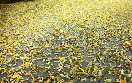 golden leaves scattered on concrete