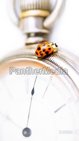 closeup of a ladybug on a
