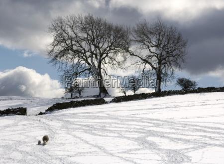 snowy field weardale county durham england