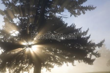 light through tree willamette valley oregon