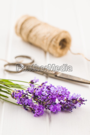 the lavender flowers