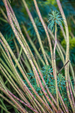 stalks of a small tropical plants