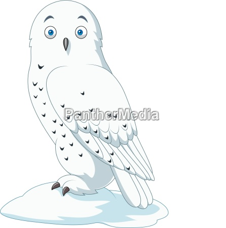 cartoon arctic owl isolated on white