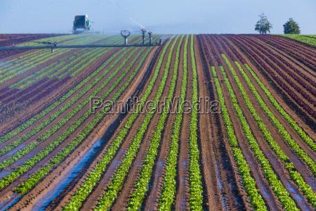 landwirtschaft mit kuenstlicher bewaesserung