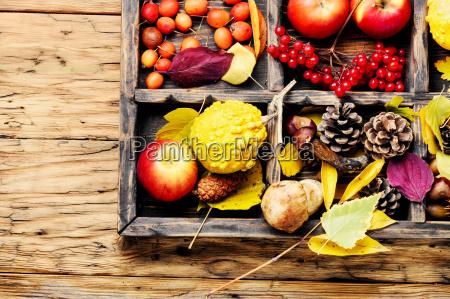 autumn apples and pumpkins