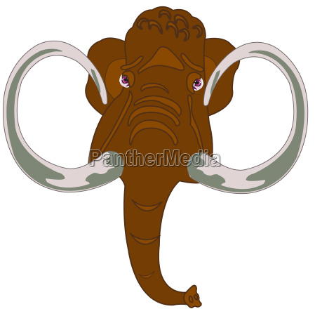 head animal mammothhead of the mammoth