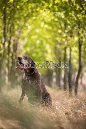 hunting dog outdoor sports hunters