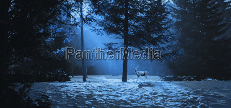 magic winter scene in the woods