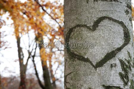 heart shaped marked against tree bark