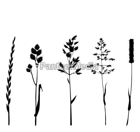 grasses silhouettes on white