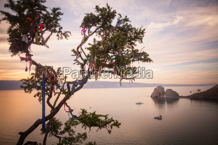 shamanic tree on baikal lake russia