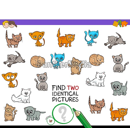 find two identical kitten pictures game