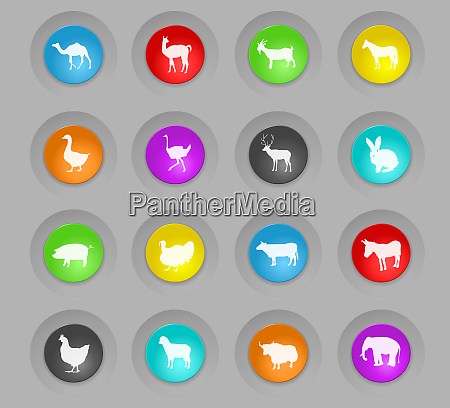 farm animals colored plastic round buttons