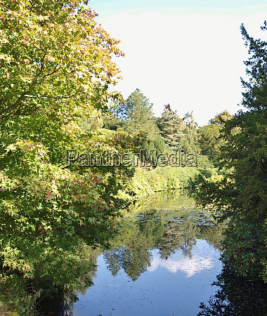 reflecions of beautiful trees in the