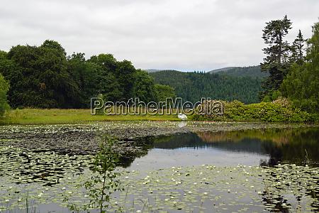 lily pond at the plodda falls