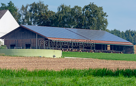 cowshed with solar cells on the