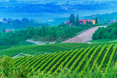 vineyards in the province of