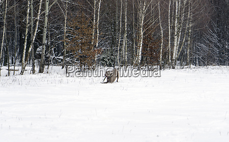 dog and winter nature