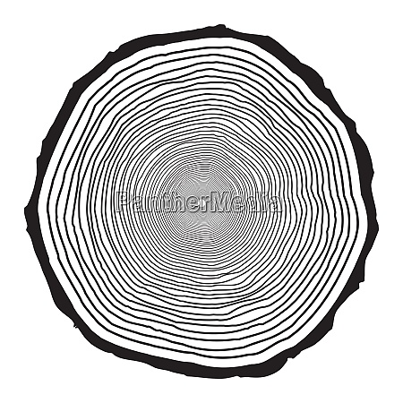 tree trunk rings design isolated on