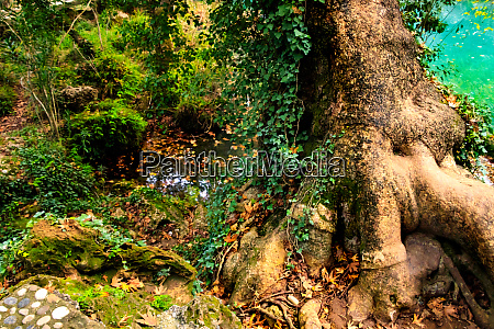 in an enchantet forest
