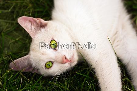 white cat in grass