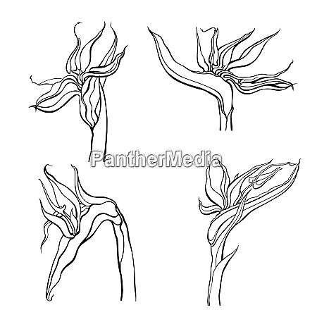 hand drawn flowers and plants