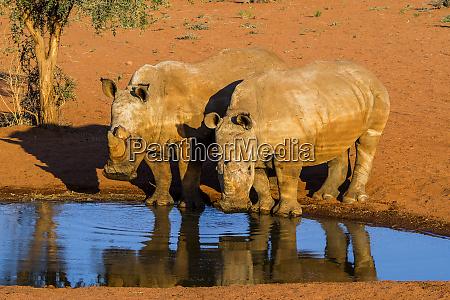 namibia namib naukluft park couple