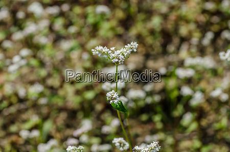 white flower in autumn