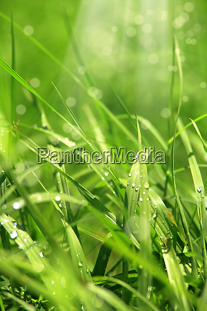 close up green grass image and